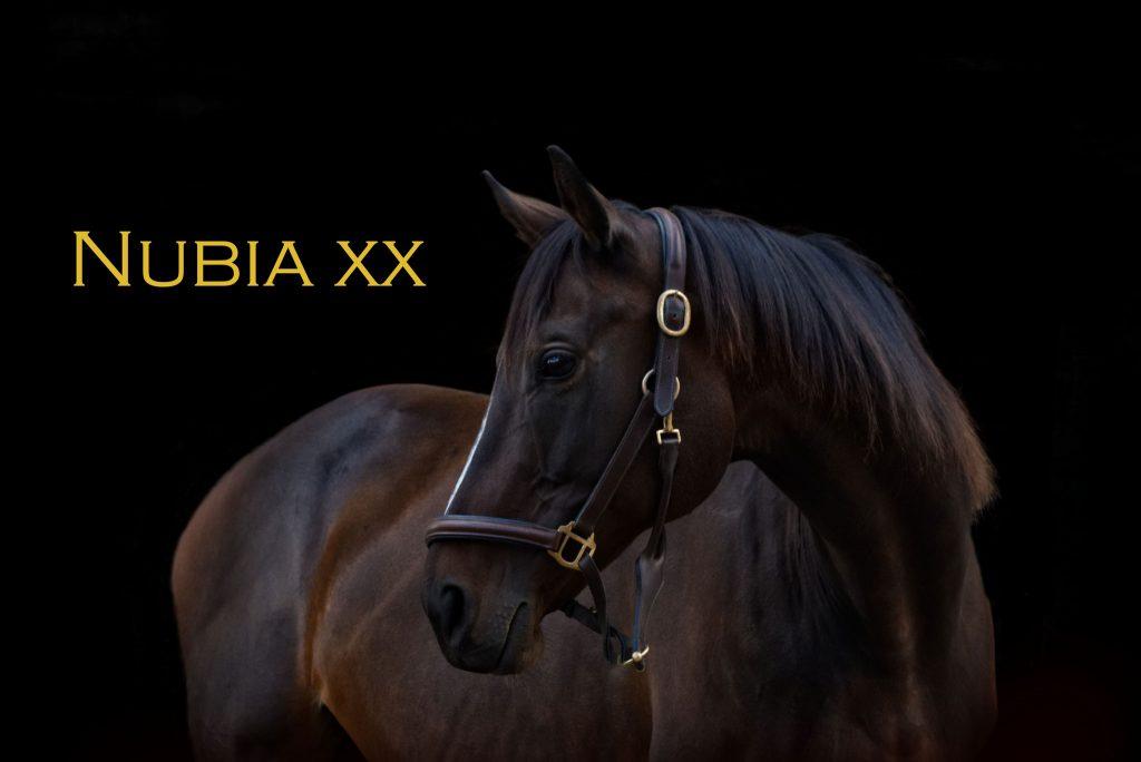 Nubia xx